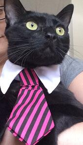 Liz cat