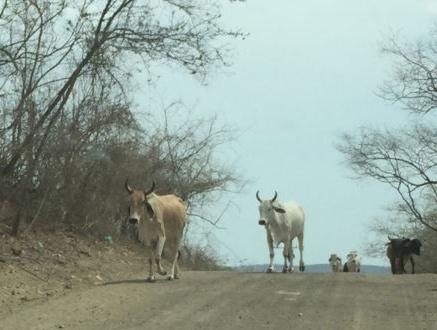 Animals in Road